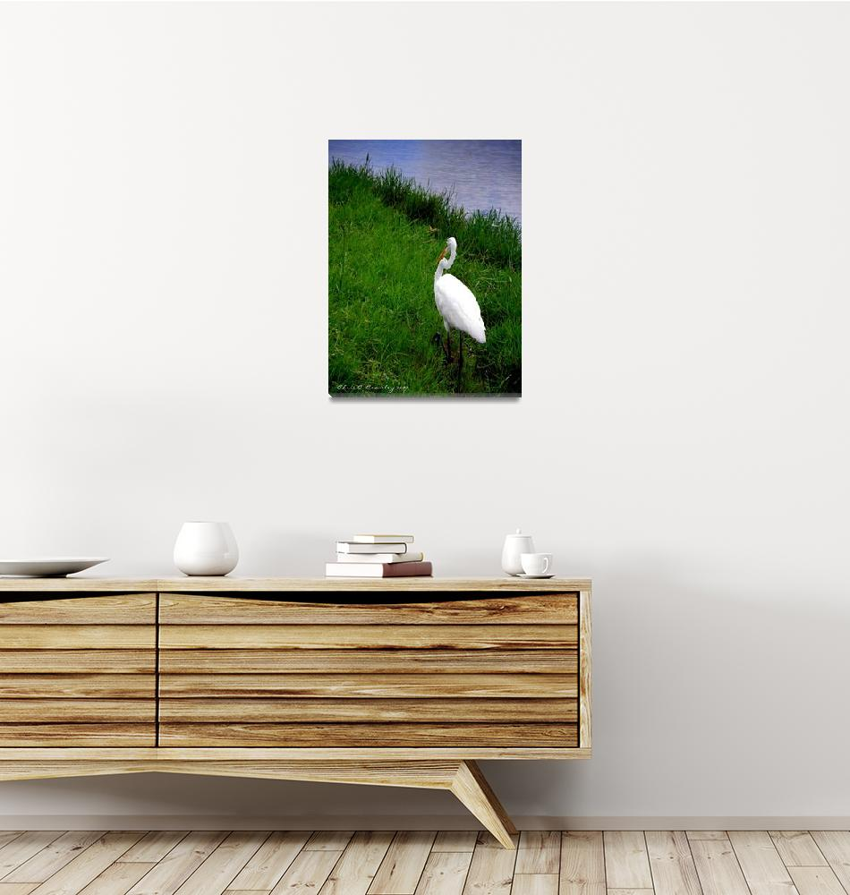"""""""Egret Chase""""  (2009) by ChrisCrowley"""