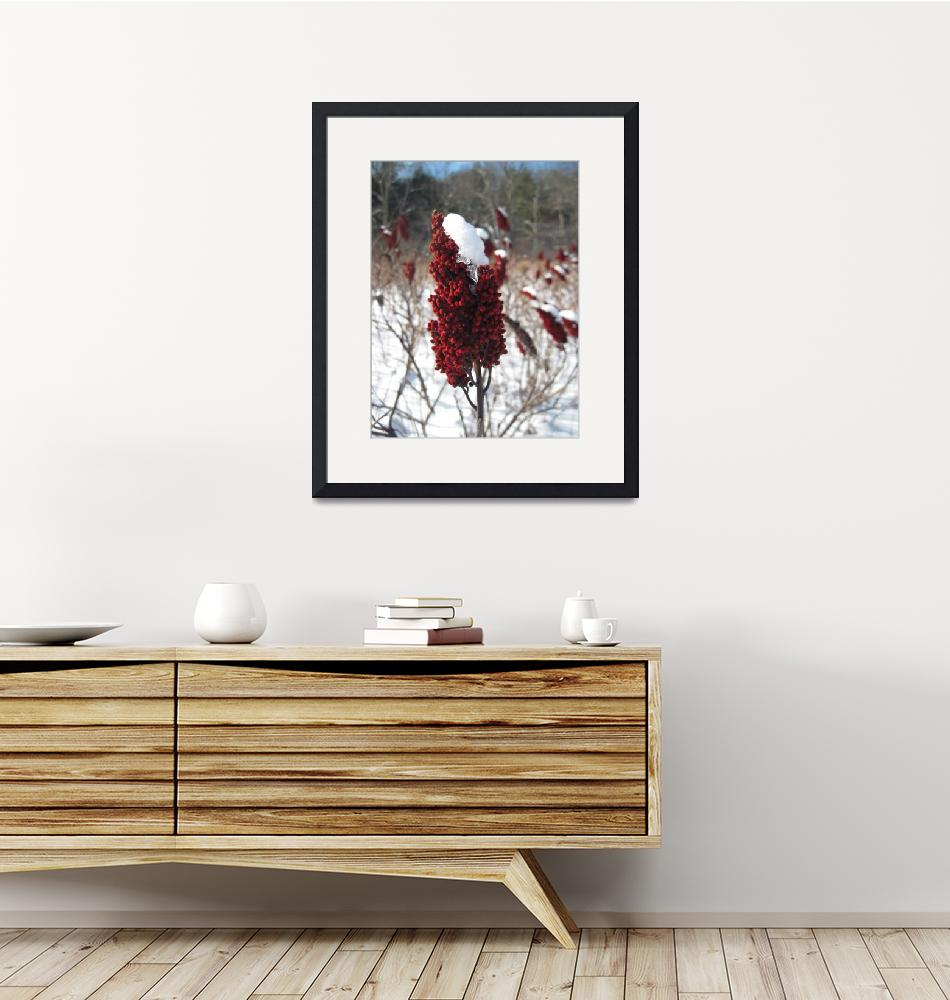 """""""Winter Reds"""" (2011) by Capricorn"""