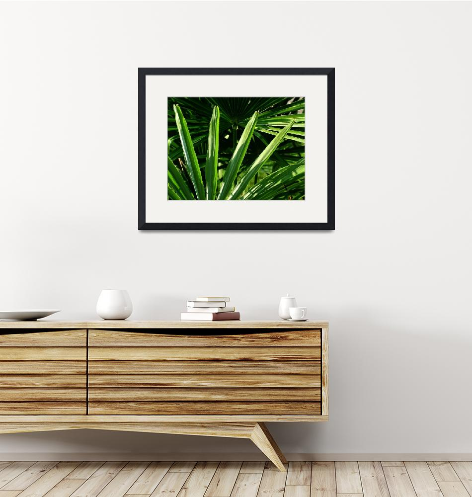 """""""Fan Palm 2""""  (2007) by DonnaCorless"""