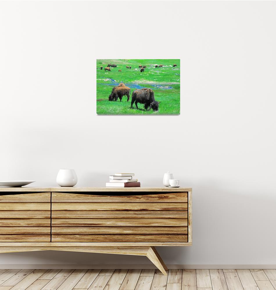 """Custer Buffalo""  (2010) by Johnson-Miles"