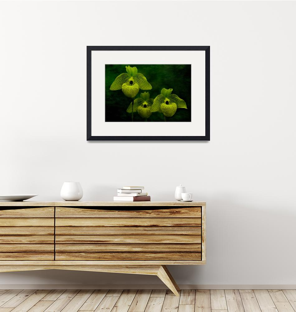 """""""Orchid Trio in Green""""  (2016) by SoulfulPhotos"""