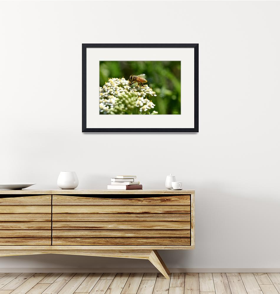 """""""Honeybee on White Flowers""""  (2012) by theblueplanet"""