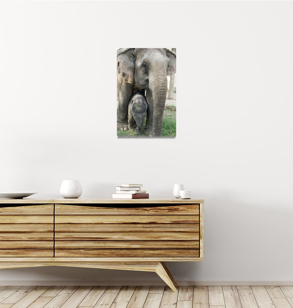 """""""Thai Elephant and Baby""""  (2008) by PatrickHallPhotography"""