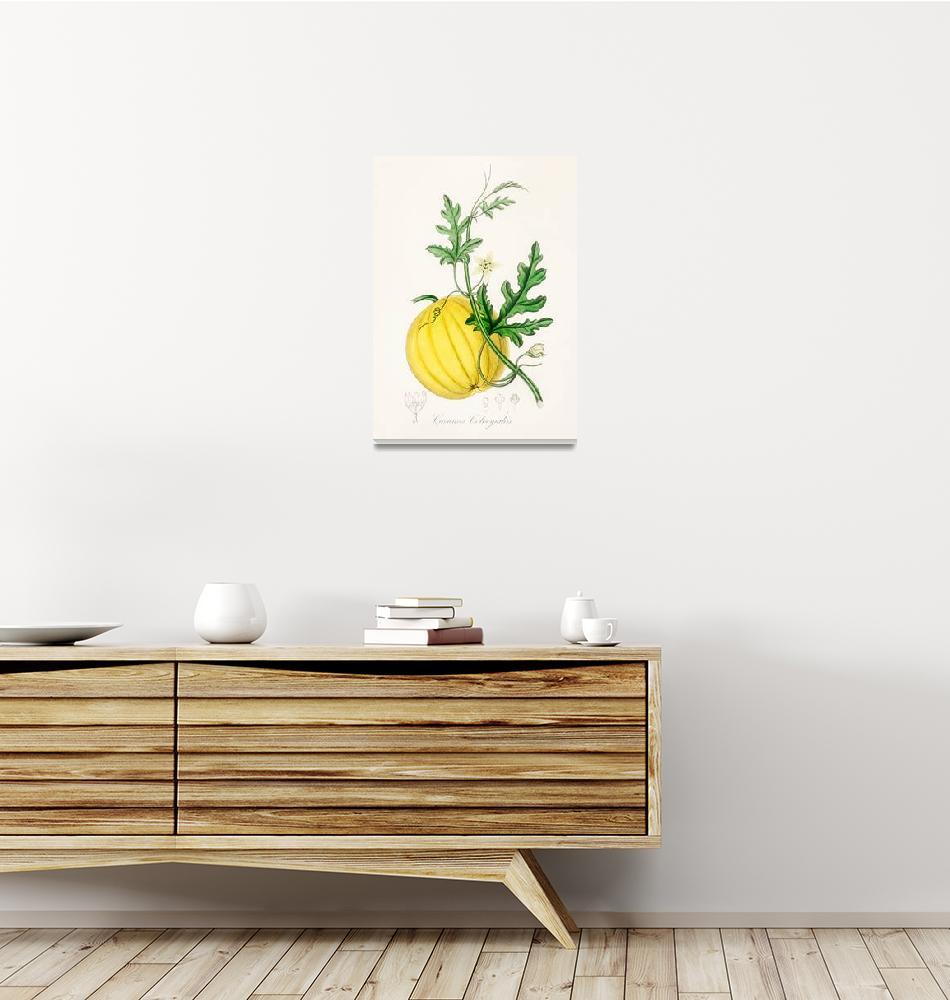 """Vintage Botanical Bitter apple""  by FineArtClassics"