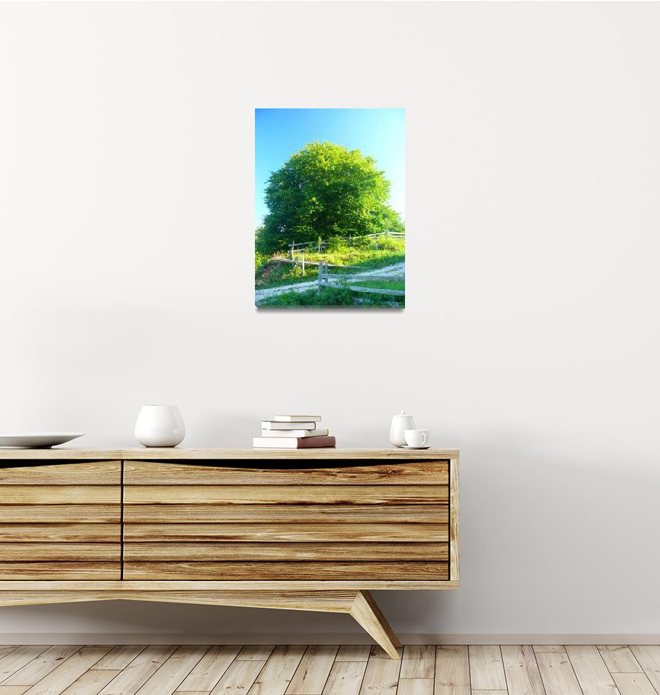 """Yellow-green Tara mountain tree - original photo""  (2013) by watercolorart"