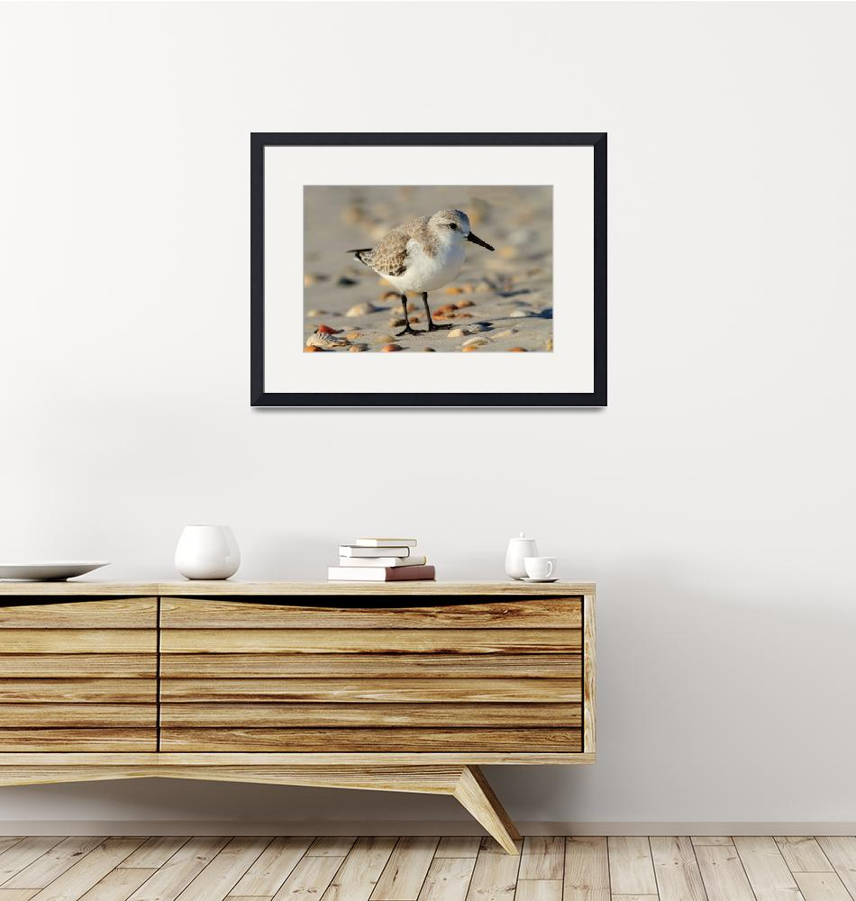 """""""Sand Piper and Seashells""""  by WorldDesign"""