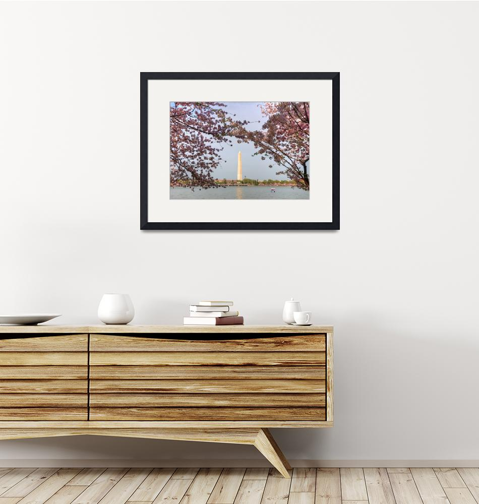 """""""Under the Cherry Blossoms""""  by ReidKasprowicz"""