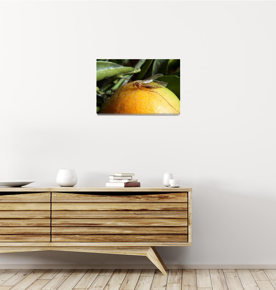 """""""Yellow Insect on an Orange""""  (2013) by rhamm"""