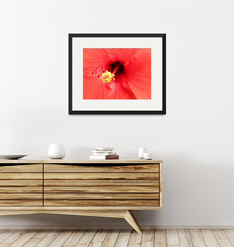 """""""Hibiscus Stamen""""  (2008) by snapdragon76"""