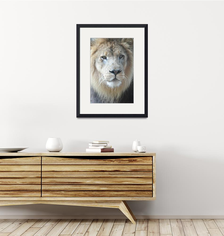 """""""African Lion""""  (2013) by artographic66"""