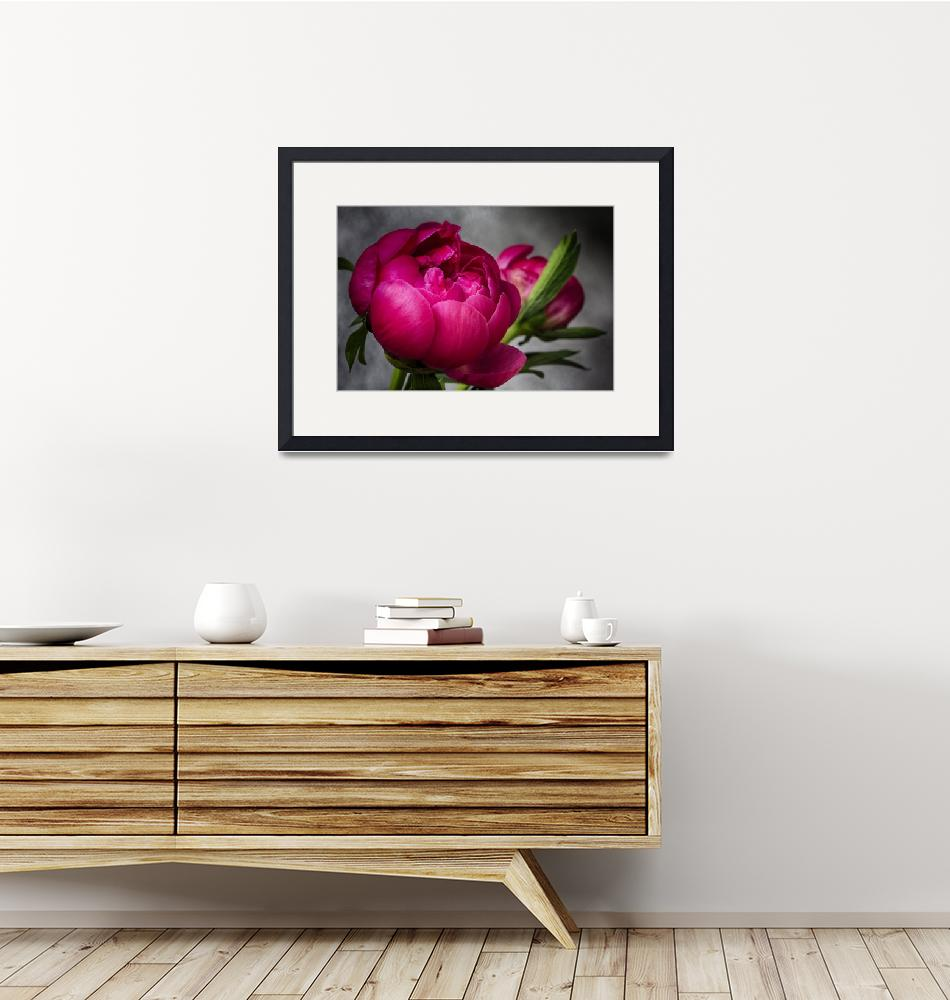 """""""Exquisite Peony""""  (2013) by SoulfulPhotos"""