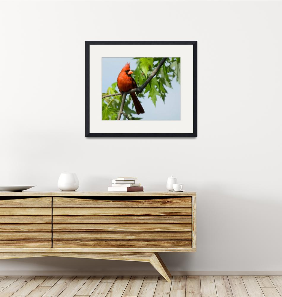 """""""A Cardinal Delight""""  by tricia"""