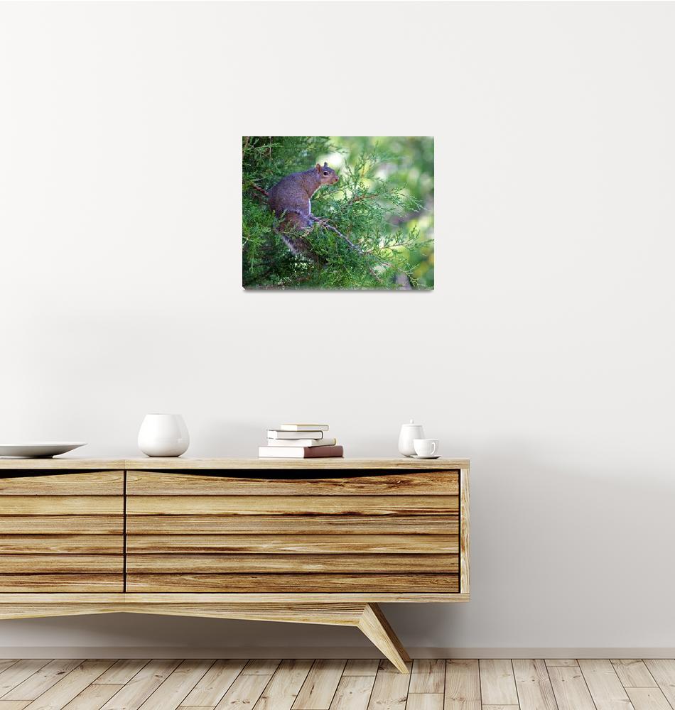 """Squirrel sitting in Evergreen Tree""  (2012) by KsWorldArt"