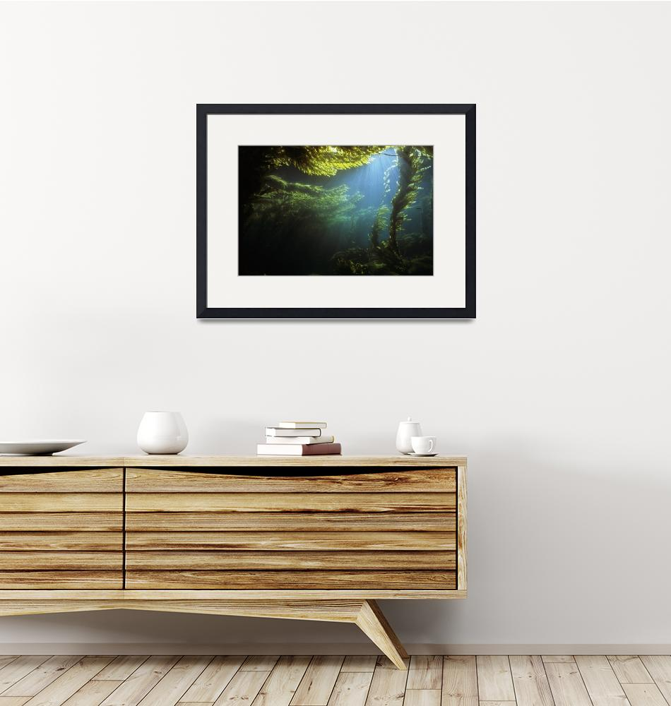 """""""Kelp Forest Scenic MF091506103""""  by Michelehall"""
