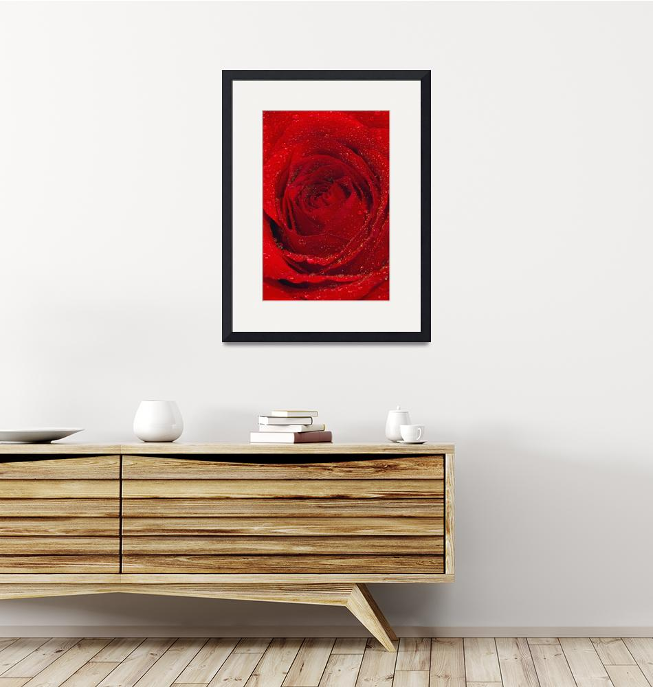 """""""Red rose""""  by OJPHOTOS"""