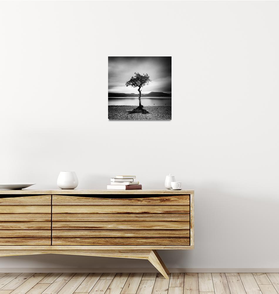 """Scotland: Milarrochy Tree""  (2011) by sensorfleck"
