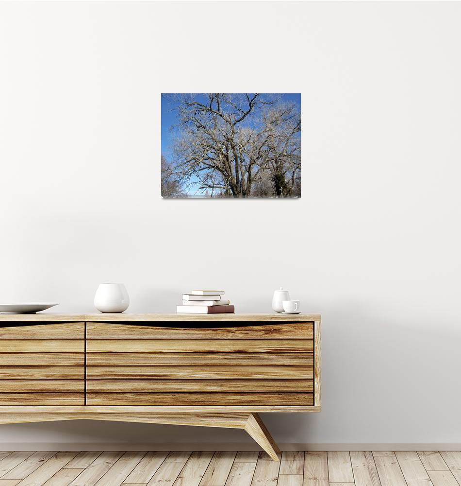 """Elder Trees""  (2008) by SunflowerArtGallery"