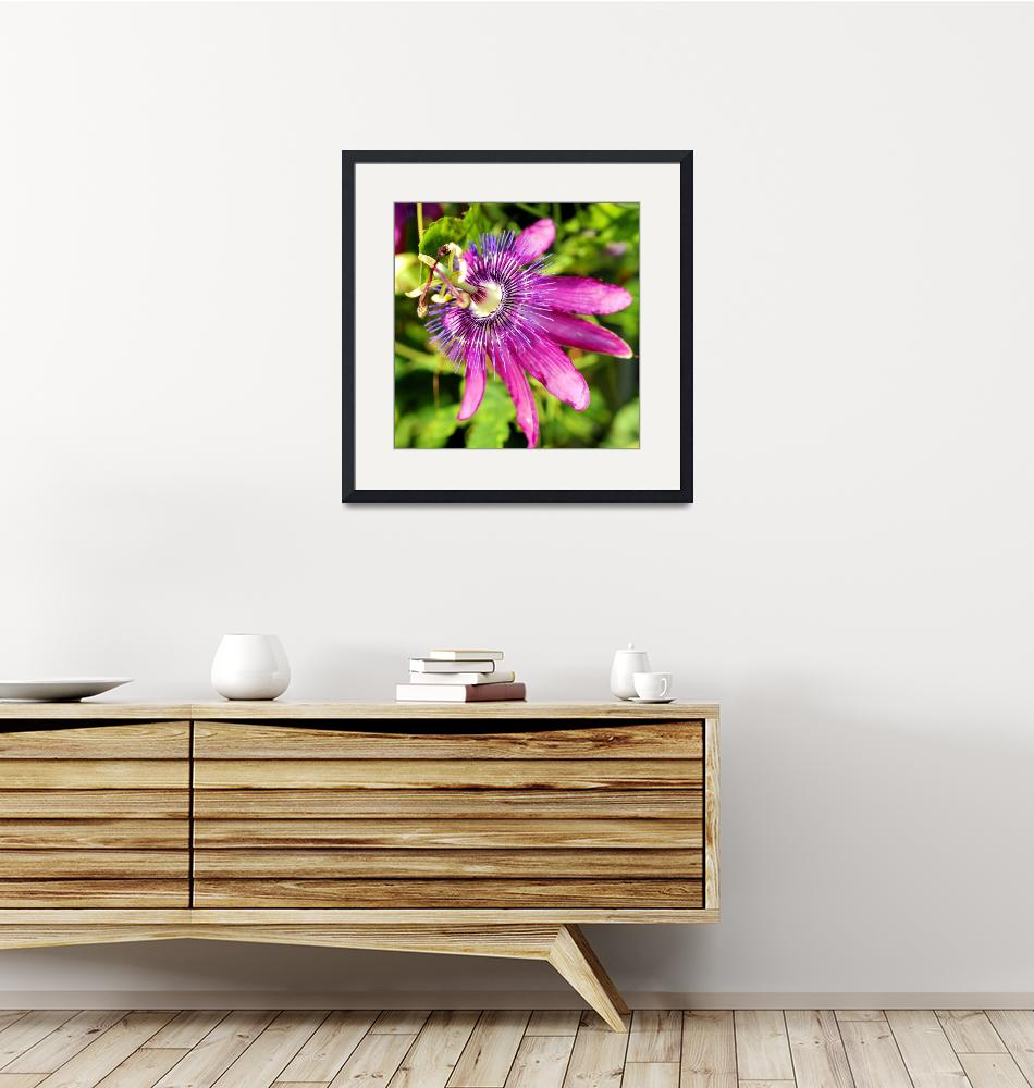"""""""Passion Passiflora""""  by doncon402"""