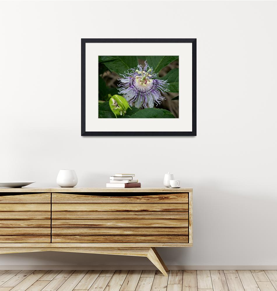 """""""Passion Flower""""  (2008) by rderder"""