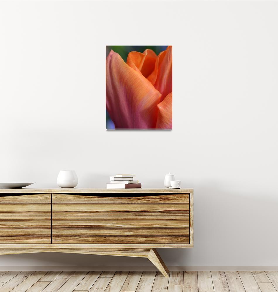 """""""""""Orange Pink Tulip 21"""" #21042315.0735 (2)""""  (2015) by achimkrasenbrinkart"""