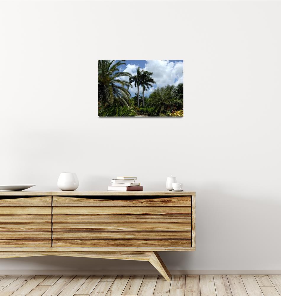"""Cayman Islands : Botanic Park""  by RonScott"
