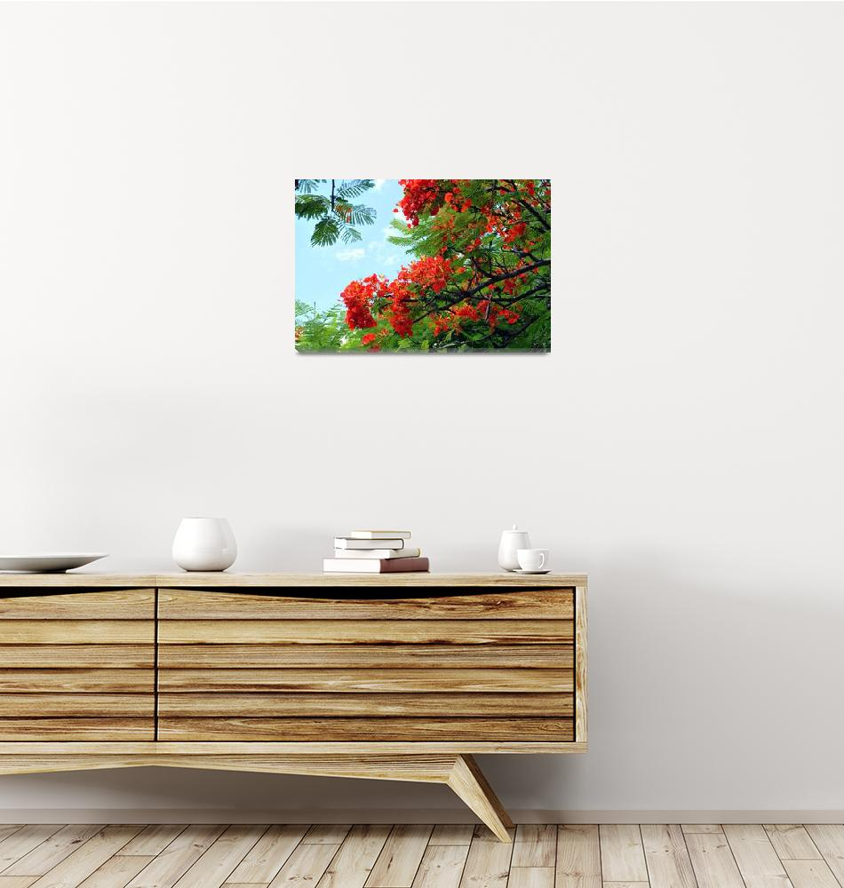 """Hawaiian Royal Poinciana Flowering Tree""  (2009) by LorrieMorrison"