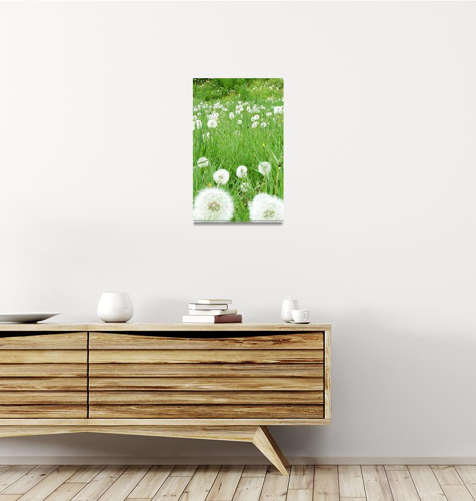 """Flower 10c Dandelion White Spring Flower Meadow""  (2010) by Ricardos"