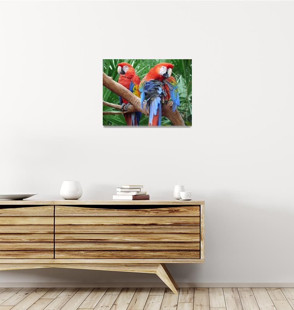 """Scarlet Macaws""  (2008) by stockphotos"