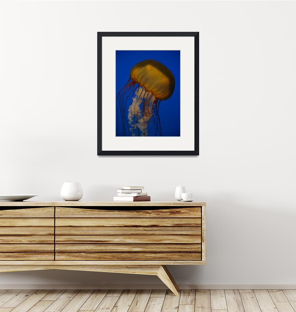 """Orange Jellyfish 2""  (2009) by Marajo"
