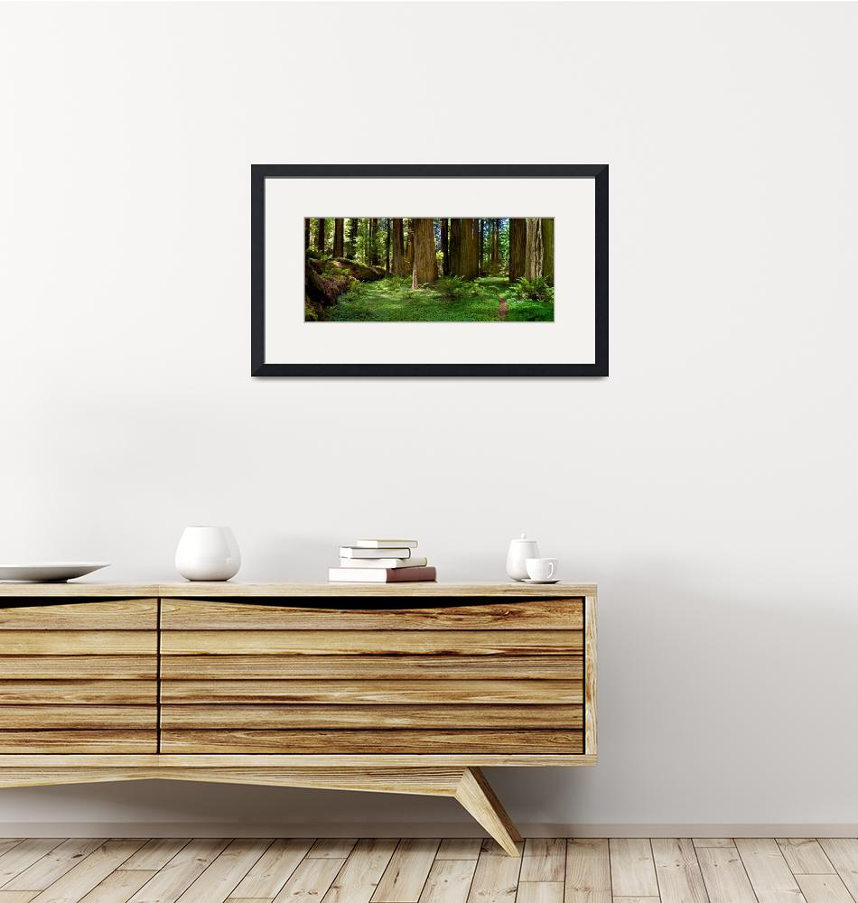 """""""Redwood Forest Panorama""""  (2008) by pbk"""