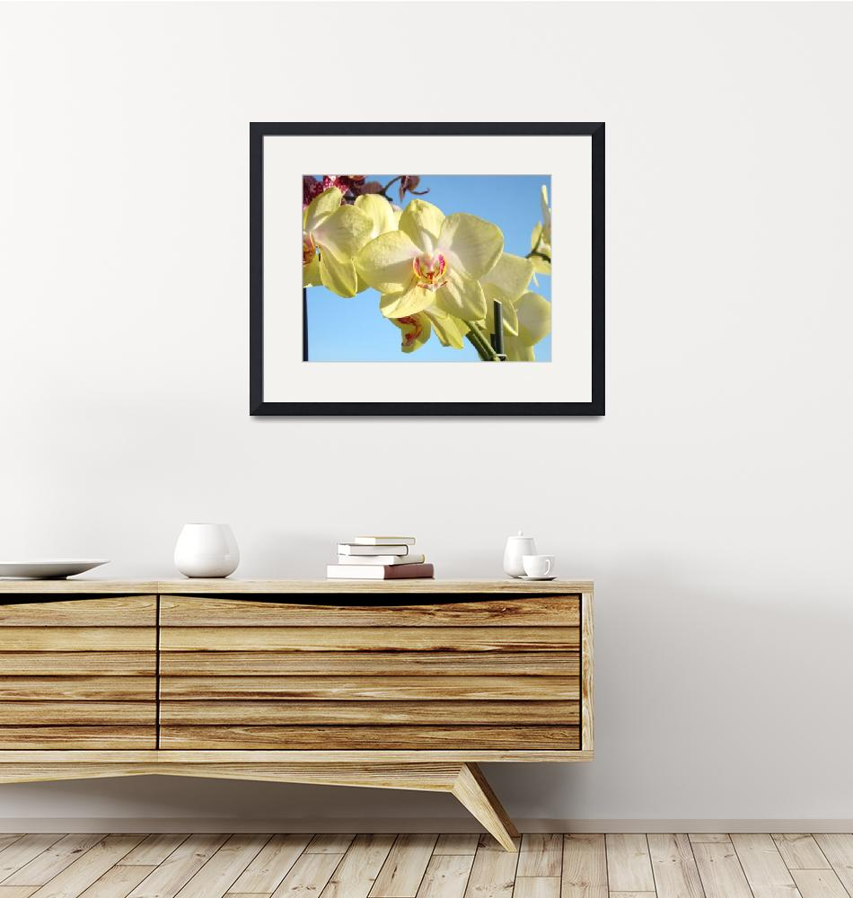 """""""Orchids Flowers art prints Orchid Floral"""" (2014) by BasleeTroutman"""