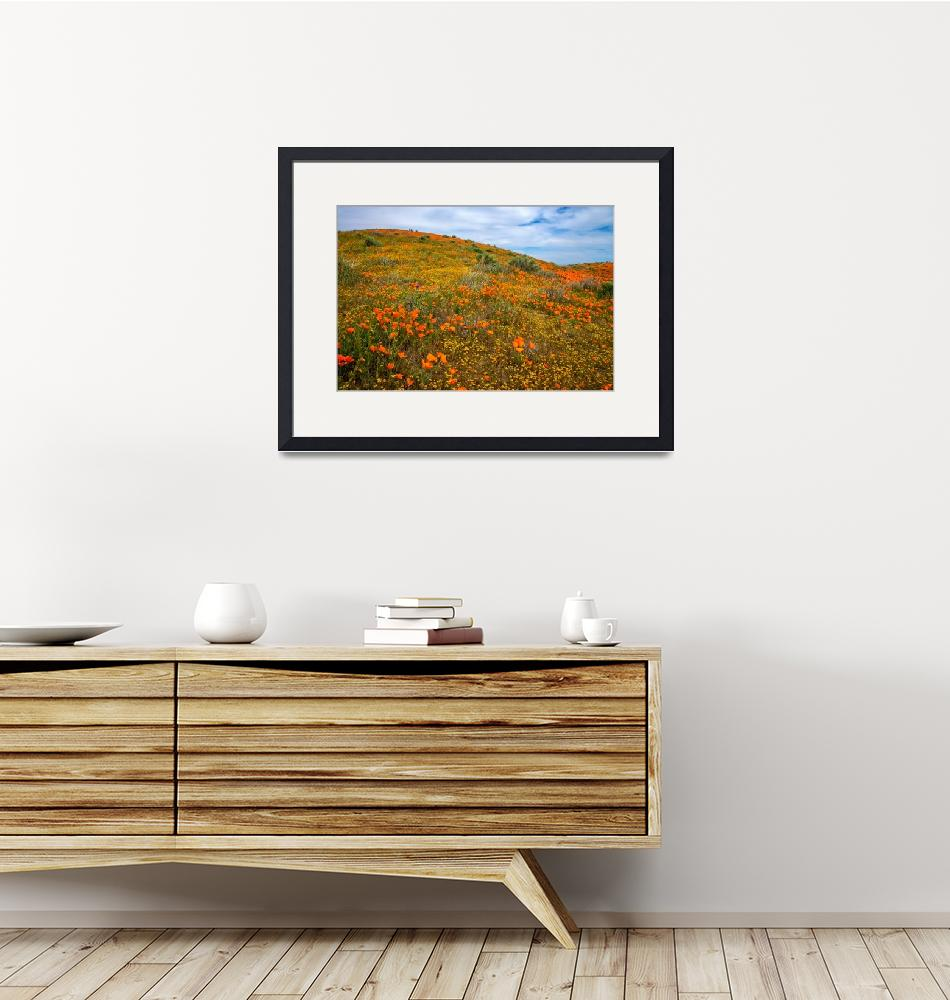 """The Bold And The Beautiful - Superbloom 2019""  (2019) by LynnBauer"