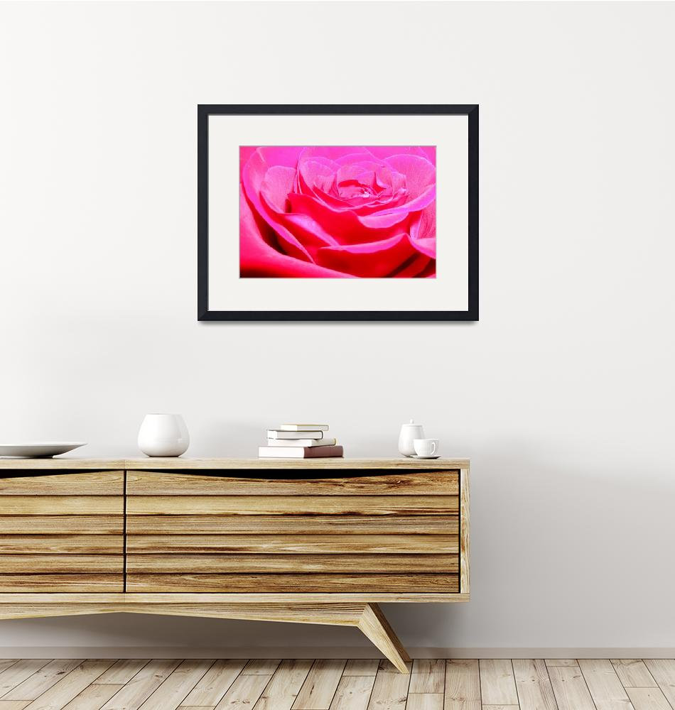 """""""Rose""""  (2010) by nsimon20"""
