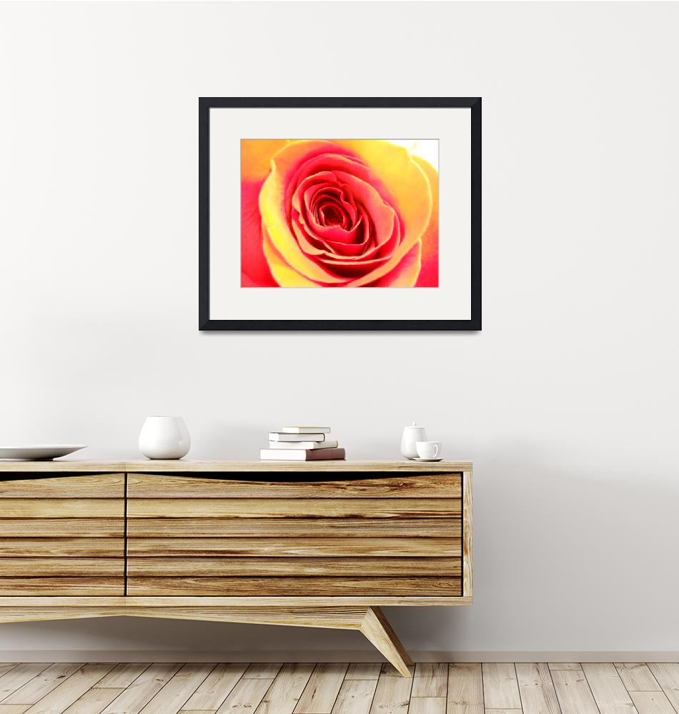 """""""Rose""""  (2010) by camerabunny"""