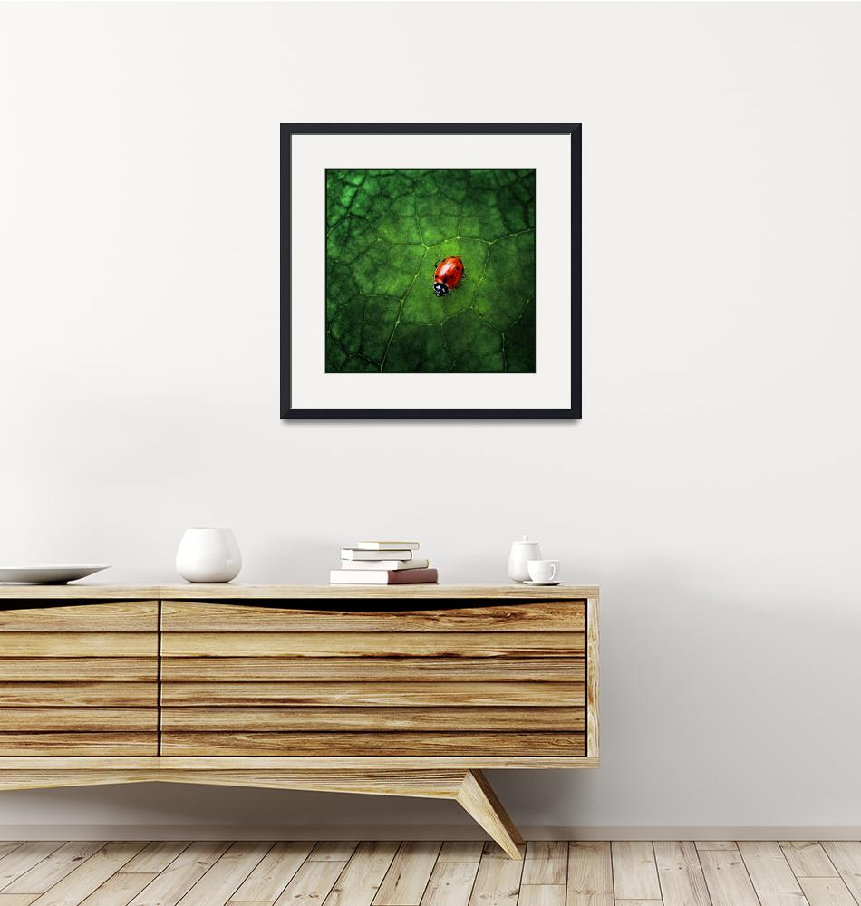 """""""Ladybug at Home""""  (2007) by jody9"""