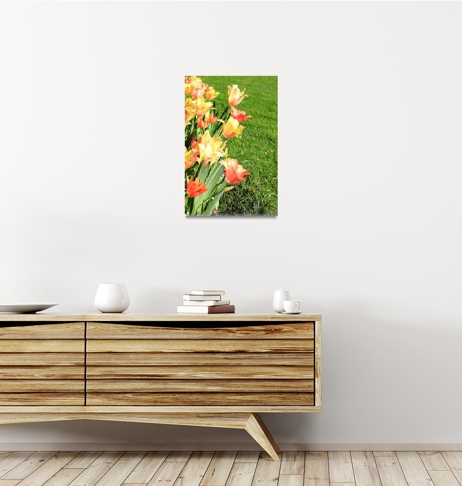 """""""Happy Tulips IMG_5431""""  (2012) by rayjacque"""