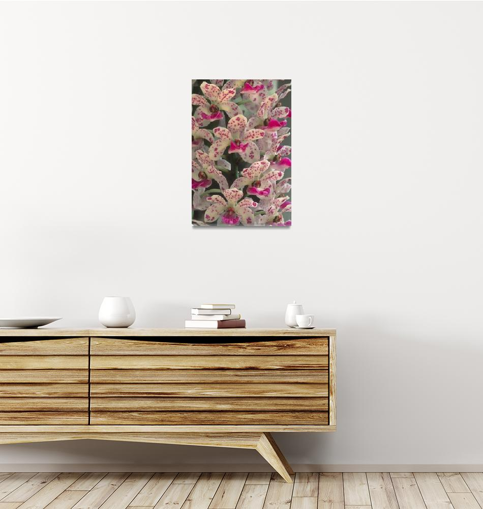 """""""Pink and White Orchid""""  by TerryCrain"""