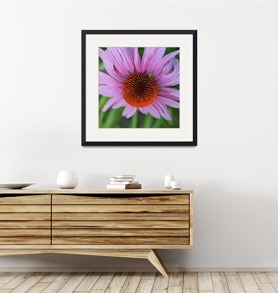 """""""Center of Echinacea""""  by SplitWindow"""