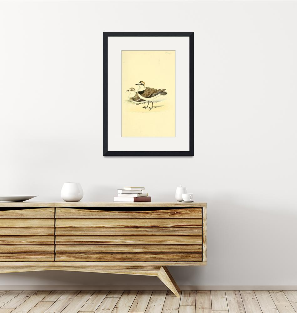 """""""Coloured illustrations of British birds, and their"""" by motionage"""