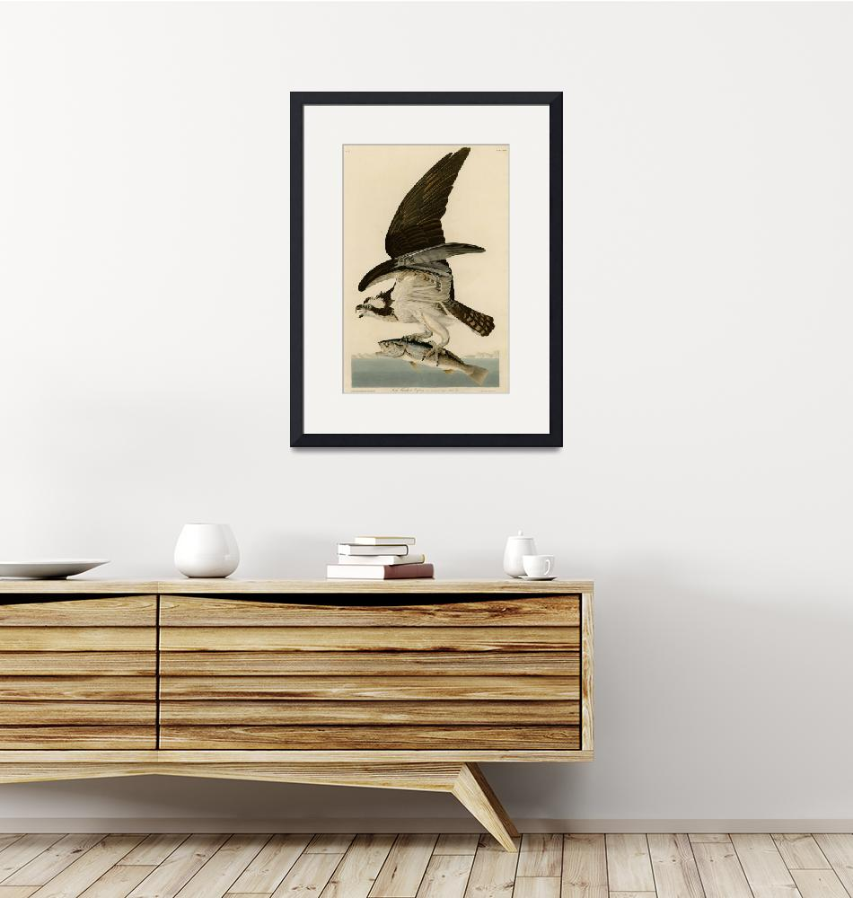 """""""Vintage Osprey Catching a Fish Illustration (1838)""""  by Alleycatshirts"""