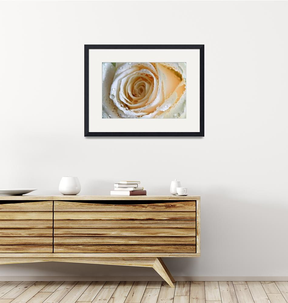"""""""Rose Swirl""""  (2012) by Tracy2912"""