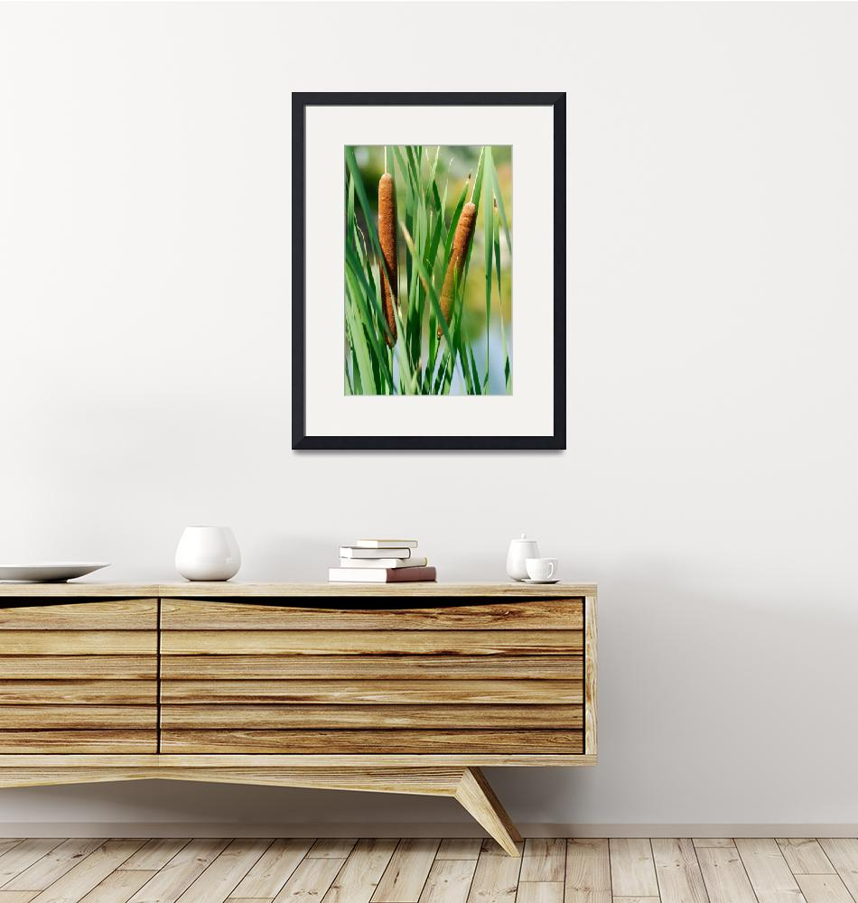 """""""Cattails""""  by Photomac"""