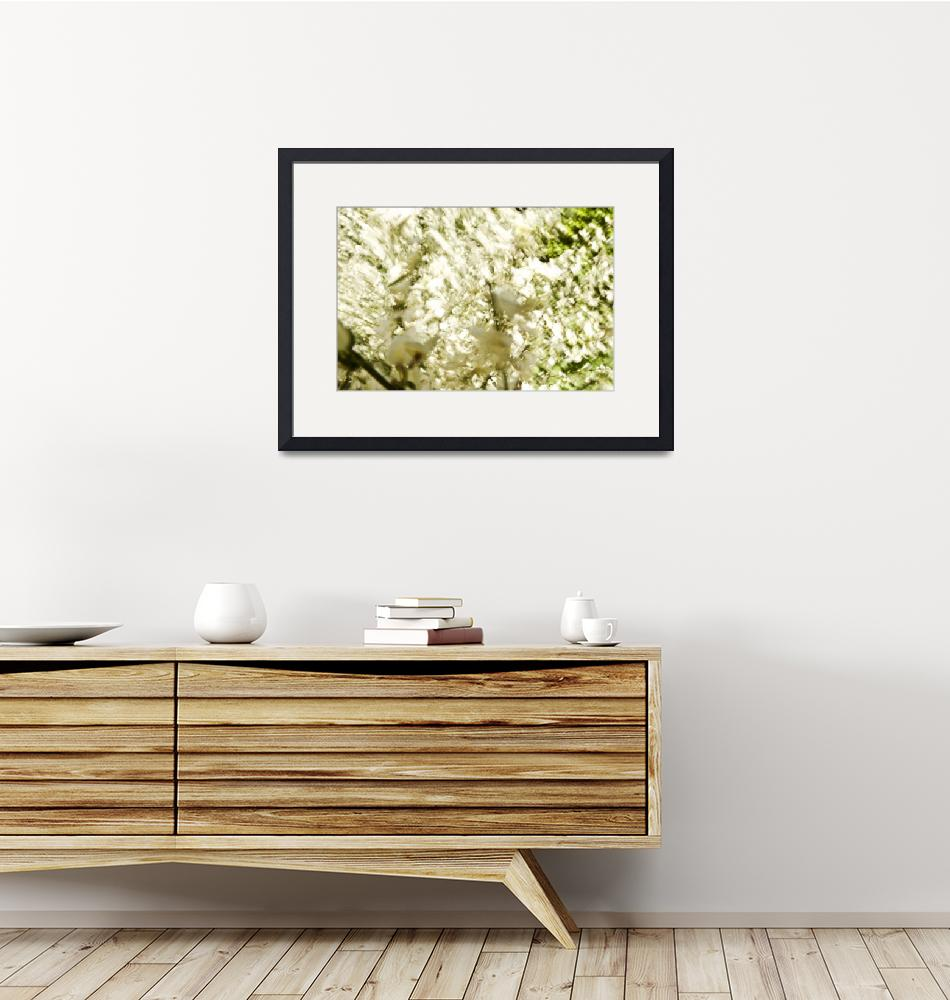 """White Flower Blossoms, Blurred Abstract""  by DesignPics"