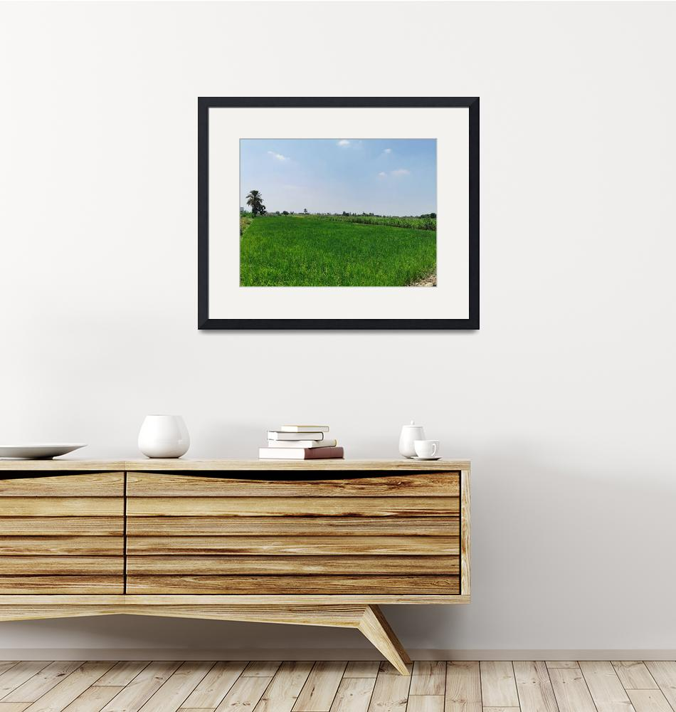 """""""A rice field""""  (2019) by Abdallahk"""