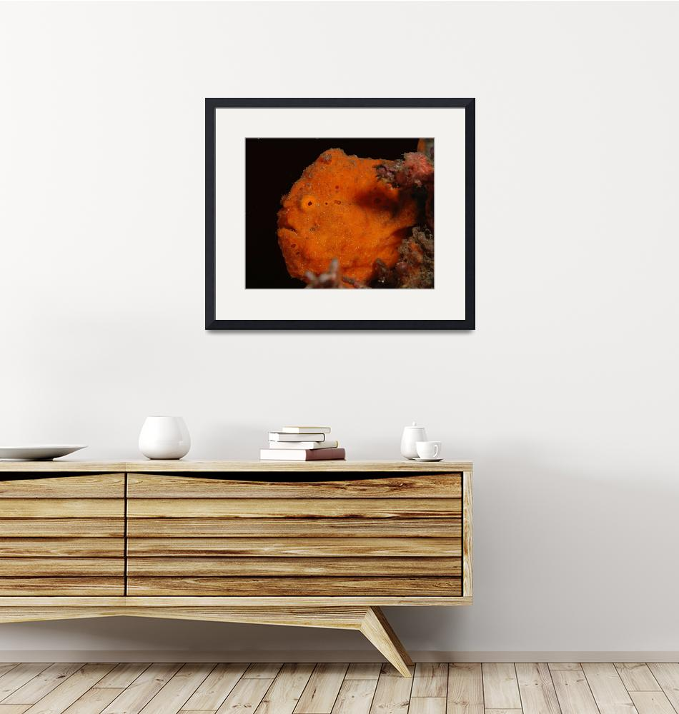 """""""Painted Frogfish""""  (2007) by Fish_Photo"""