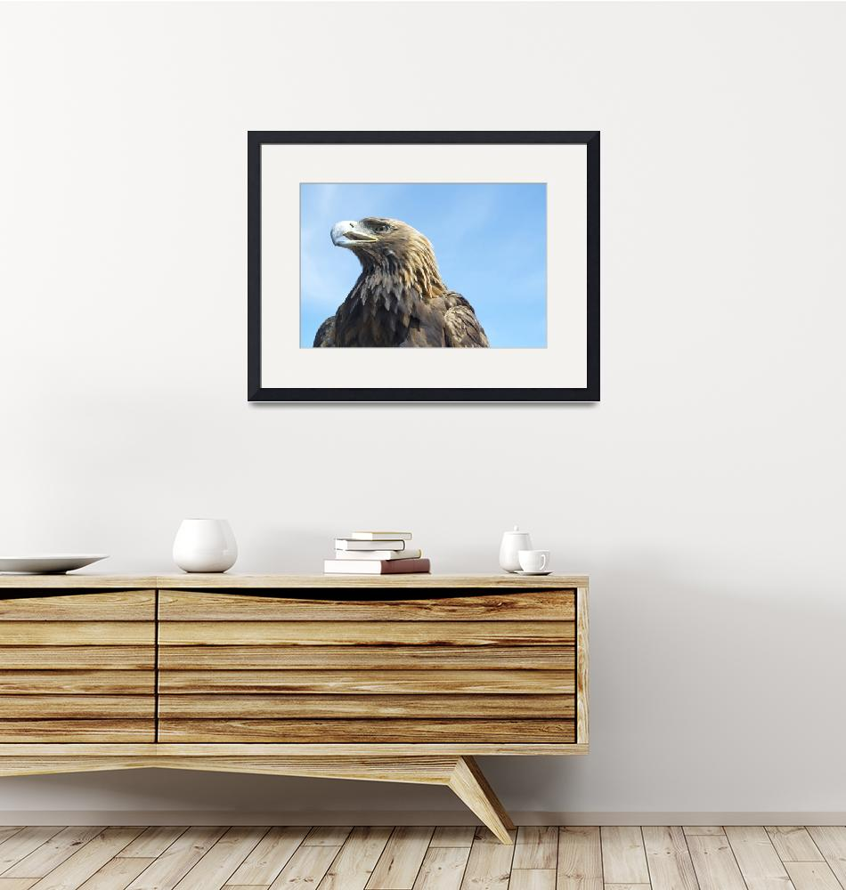 """""""Golden Eagle, Mongolia""""  by dpsmith7"""