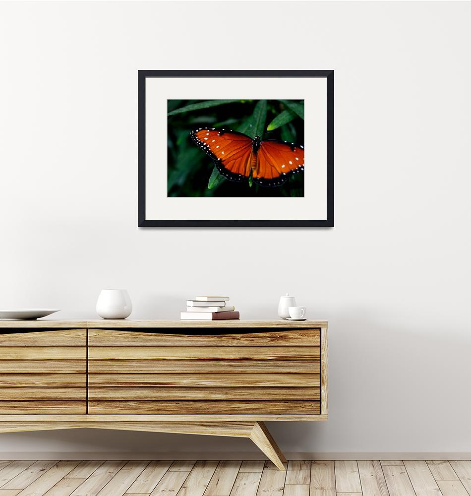 """""""Butterfly Show 22""""  by ChrisThompson"""