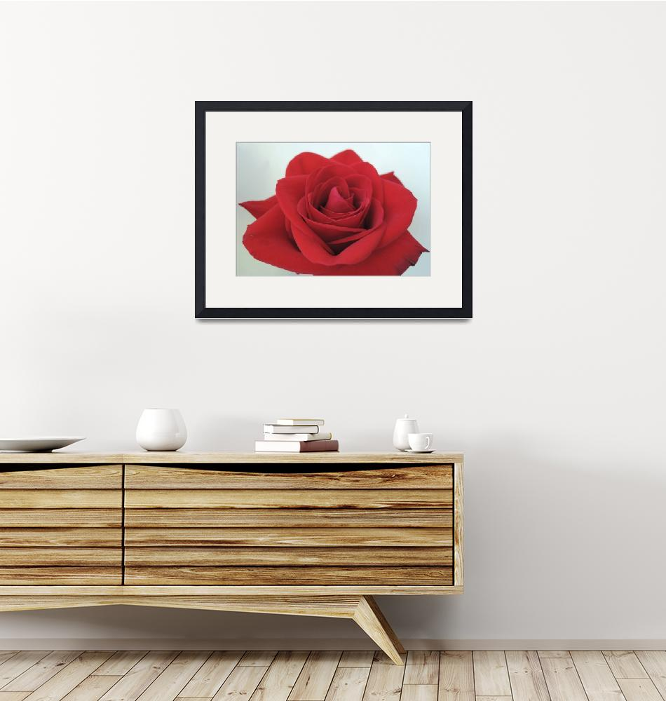 """""""A Red Rose""""  (2014) by MarieKelzer"""