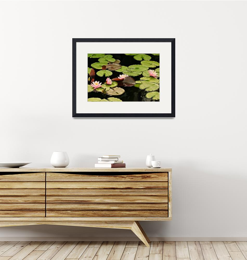 """""""The loveliness of Waterlilies""""  (2014) by LightHeart"""