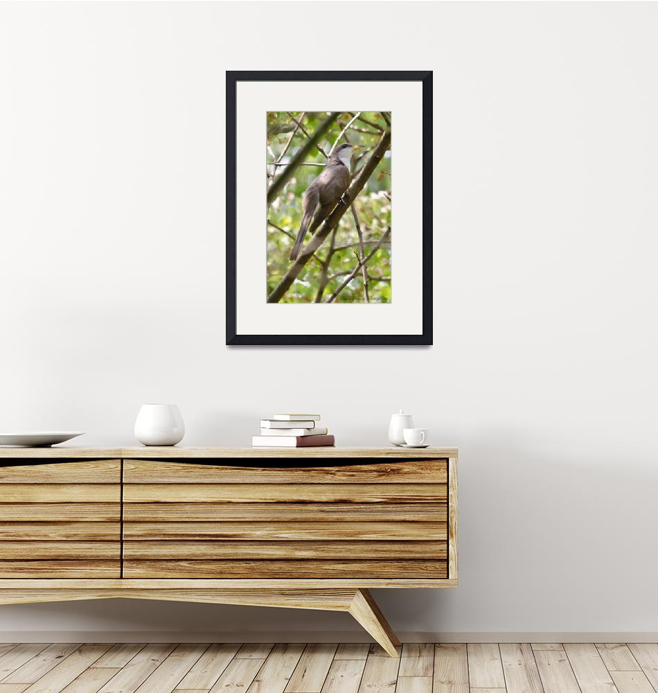 """""""Yellow-billed Cuckoo""""  (2012) by WildAboutNaturePhotography"""